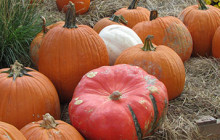 Pumpkin Popularity Gives Fall Extra Flavor