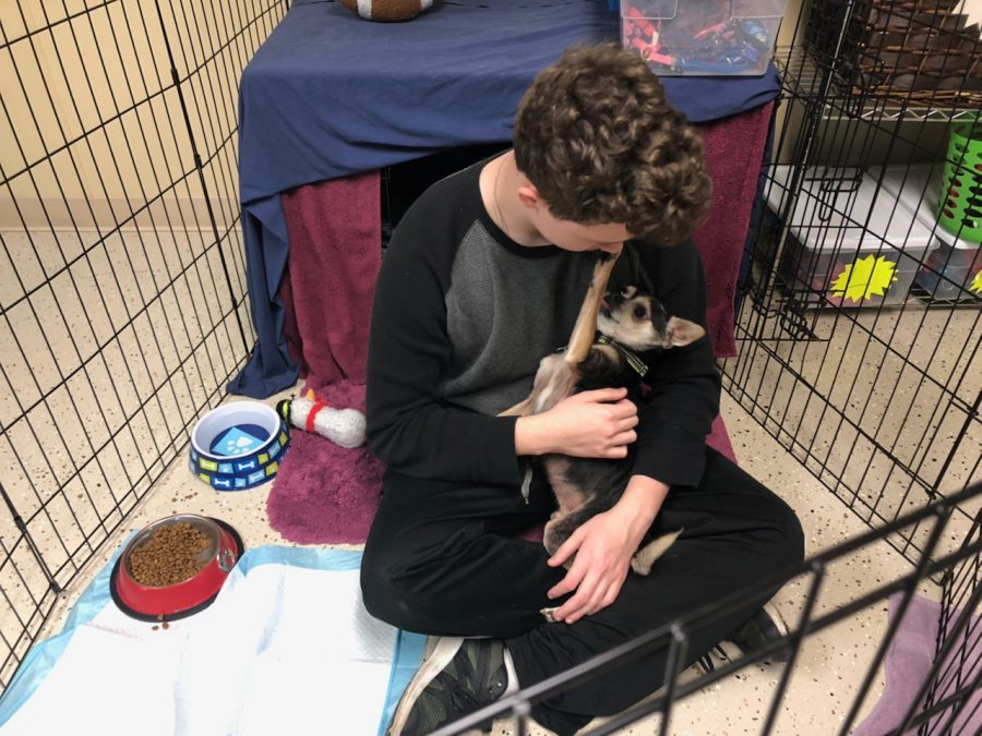 Junior Lawson Lee comforts a rescue dog. Lawson volunteers at the animal shelter in his free time for his community service activity.