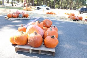 The Williams Memorial Church annually holds a pumpkin patch where people can pick out pumpkins to take home and decorate.